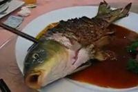 Čerstvá rybka