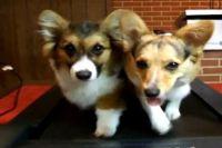 Venčení psů pro lenochy