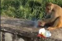 Zmrd dal opici do žrádla petardu